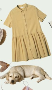 blouse,yellow,button up,flowy,collar,short sleeve