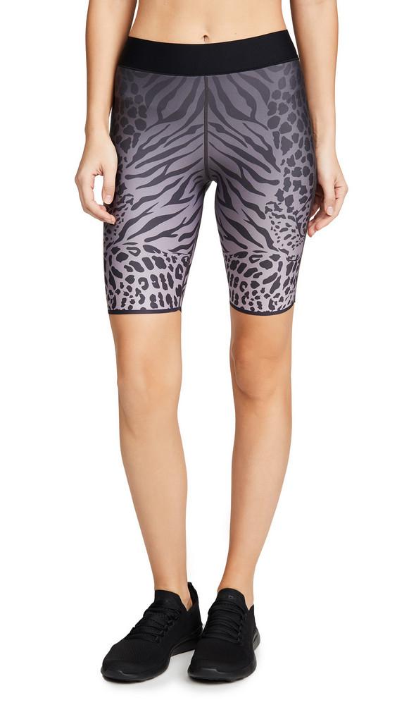 Ultracor Aero Panthera Shorts in lavender